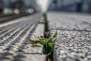 Straßenbeton und Pflanze, Foto: Markus Distelrath - Pixabay