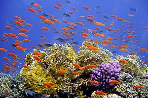 Lebensräume lebensnah: Wie man Biologie bestmöglich lehrt und lernt, erforscht seit genau zehn Jahren das Fachdidaktikzentrum. Foto: Joakant / Pixabay