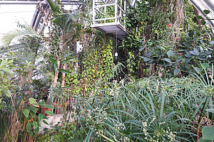 Gärten sind Ort der biologischen Vielfalt. Foto: Uni Graz/Grube