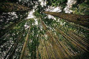 Zellulose ist nicht nur der Grundstoff von Holz: ChemikerInnen erforschen neue Ansätze für Arzneimittel basierend auf Zellulose-Nanopartikeln. Foto: pixabay.com