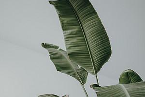 Topfpflanze sorgt für Urlaubsgefühl