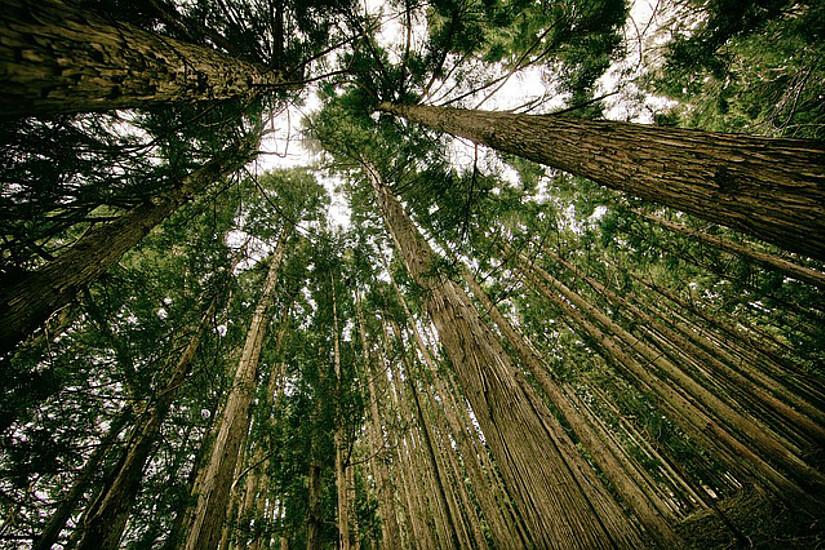 Der Wald gerät durch den Klimawandel unter Druck. ForscherInnen suchen nach Auswegen für die Bewirtschaftung. Foto: pixabay