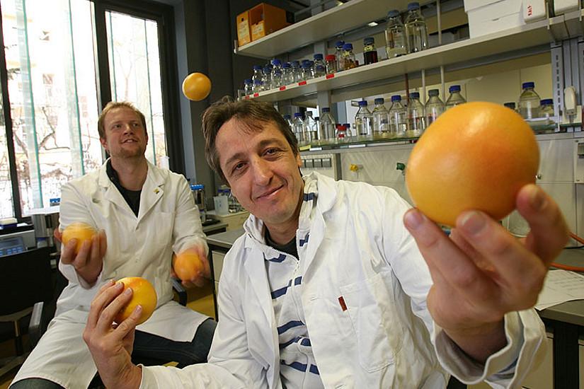Grapefruits sind wie alle Zitrusfrüchte besonders spermidinreich. Frank Madeo (r.) und Tobias Eisenberg fanden heraus, dass Spermidin den Zellreparatur-Mechanismus Autophagie auslöst und damit das Altern verlangsamen kann. Foto: Uni Graz/Lunghammer