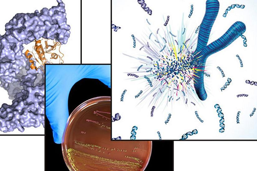 """Ein internationales ForscherInnenteam mit Uni Graz-Beteiligung konnte erstmals molekulare Mechanismen aufklären, die zu den neurologischen Erkrankungen ALS und FTD führen. Die Ergebnisse wurden in """"The EMBO Journal online"""" publiziert. Foto: Exploding ch"""