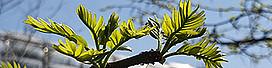 LASS WISSEN WACHSEN  Pflanzenpatenschaften