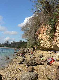 Late Miocene reef limestone of the Mikindani Formation at Mtwara Bay in Tanzania.