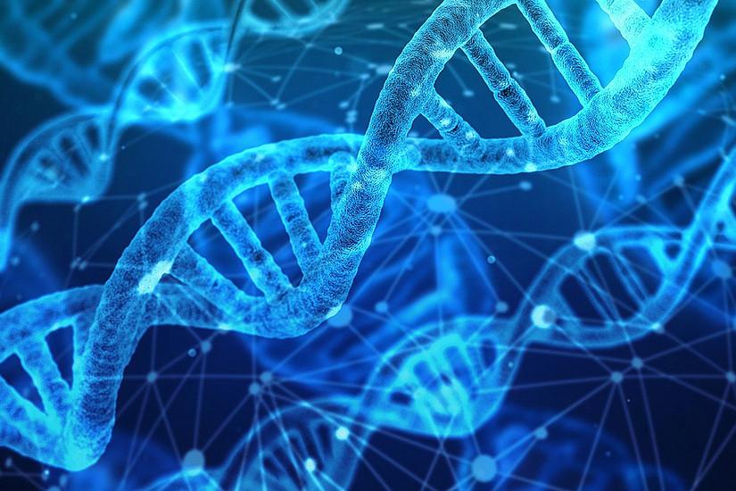 Ein neues Doktoratsprogramm blickt in biomolekulare Vorgänge. Foto: Gerd Altmann – Pixabay
