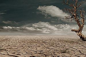 Ausgetrockenter Boden und verdorrter Baum vor dramatischer Wolkenstimmung.