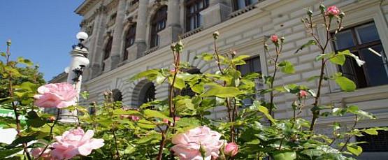 Universität, Gebäude, Blumen