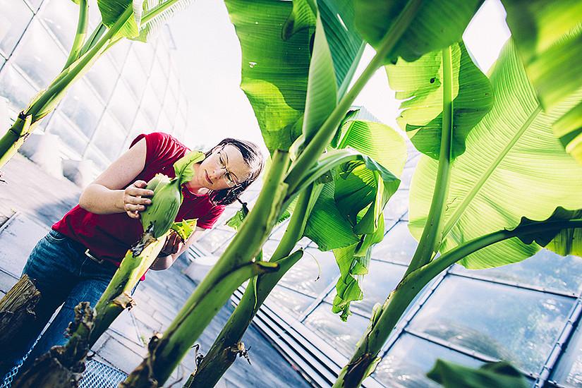 Im Freiland Labor wächst buchstäblich Wissen - vor allem über Pflanzen. Foto: Uni Graz/Kanizaj