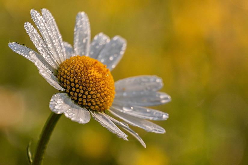 Ob prachtvoll oder unscheinbar, auch Grünstreifen, Vorgärten und selbst Betonritzen treiben hübsche Blüten. Diese gilt es nun zu dokumentieren. Foto: Pixabay