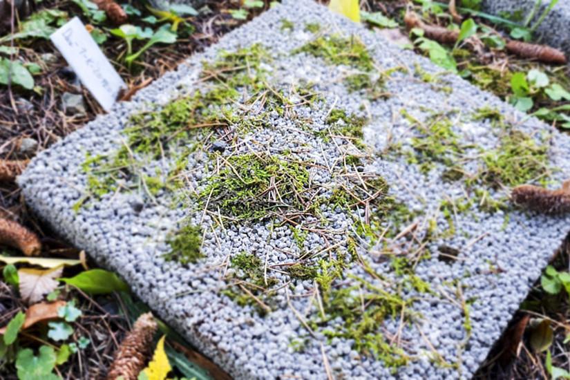 Im Botanischen Garten wurden nun Platten, die aus unterschiedlichen Betonsorten bestehen, mit Moosen beimpft. Die Messdaten werden nun ausgewertet. Die ForscherInnen erhoffen sich dadurch neue Erkenntnisse im Zusammenspiel von Baumaterial und Moosart