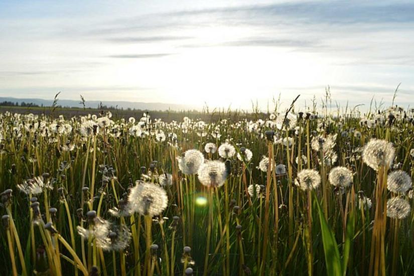 """Der Klimawandel und seine Entwicklungen ist großes Thema des wissenschaftlichen Blogs ClimateFootnotes.com, der von jungen ForscherInnen des Doktoratkollegs """"Klimawandel"""" betreut wird. Foto: Pixabay.com"""