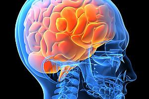 Neuer spannender Forschungsfilm zu Gehirn und Verhalten. Foto: Microsoft