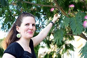 Der chinesische Seidenbaum trägt derzeit herrliche Blüten. Pia Raab interessiert sich allerdings für die entzündungshemmenden Inhaltsstoffe seiner Rinde. Foto: Uni Graz/Eklaude