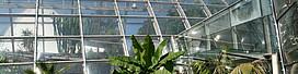 Institut für Pflanzenwissenschaften