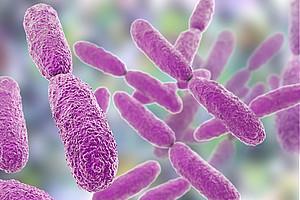 Das Bakterium Klebsiella oxytoca kann eine schwere Darmerkrankung auslösen. ForscherInnen haben nun herausgefunden, welche Strategien das Bakterium dabei anwendet. Foto: shutterstock/Kateryna Kon.