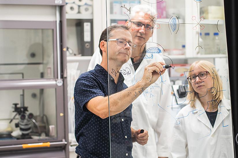 Beim ersten Durchgang der Start-up-Werkstatt werden drei Ideen ausgewählt, beim Spin-Off Lab wird sich das Unicorn-Team für ein Forschungsprojekt entscheiden, dessen Idee zur Anwendung kommen soll. Foto: Lukas Elsneg.