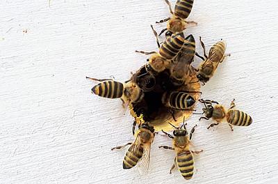 Mediation Konfliktmanagement Streitschlichtung Bienenstock