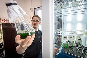 Im Algenlabor des Instituts für Molekulare Biotechnologie der TU Graz wachsen und gedeihen Mikroalgen. Foto: TU Graz/Jimmy Lunghammer