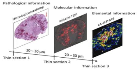 graphische Beschreibung des Vorgehens während des Bio-Imagings (kombinieren von Histologigeschen, molekularen und elementaren Daten)
