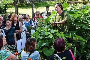 """Tolle Knolle: Der Botanische Garten der Universität Graz lud zum """"Brunchen"""" und auch zum Kennenlernen von bekanntem und rarem Wurzelgemüse. Fotos: Uni Graz/Schweiger"""