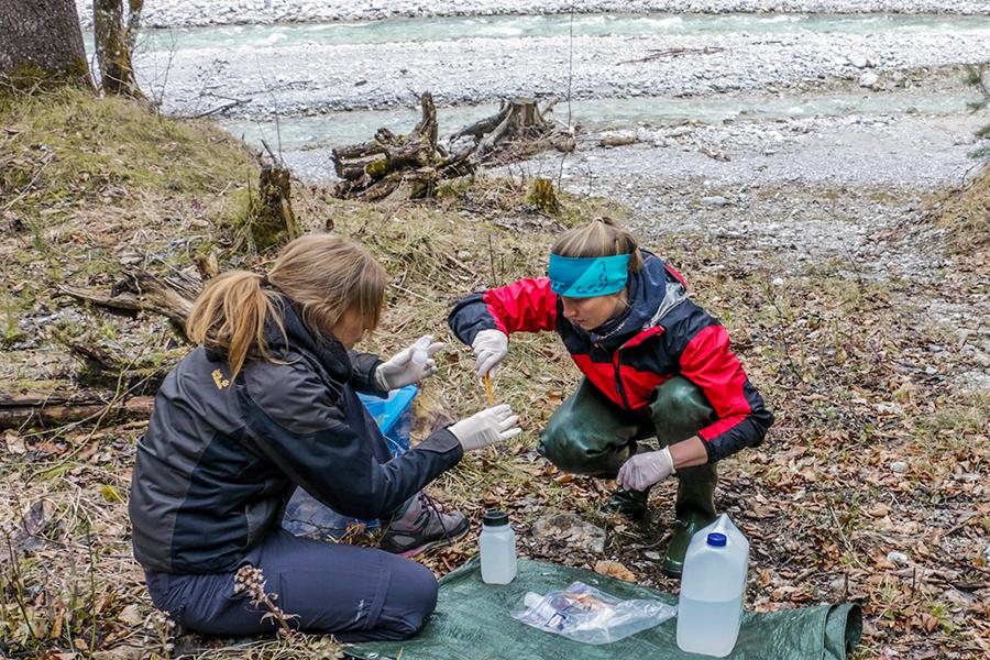 Mit Hilfe von Umwelt-DNA konnten Biologinnen der Universität Graz die Äsche im Johnsbach nachweisen. Foto: Uni Graz
